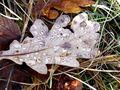 Herbstblatt von Luci 11