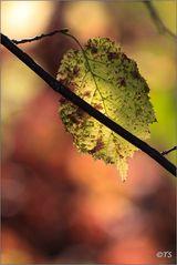 Herbstblatt (1)