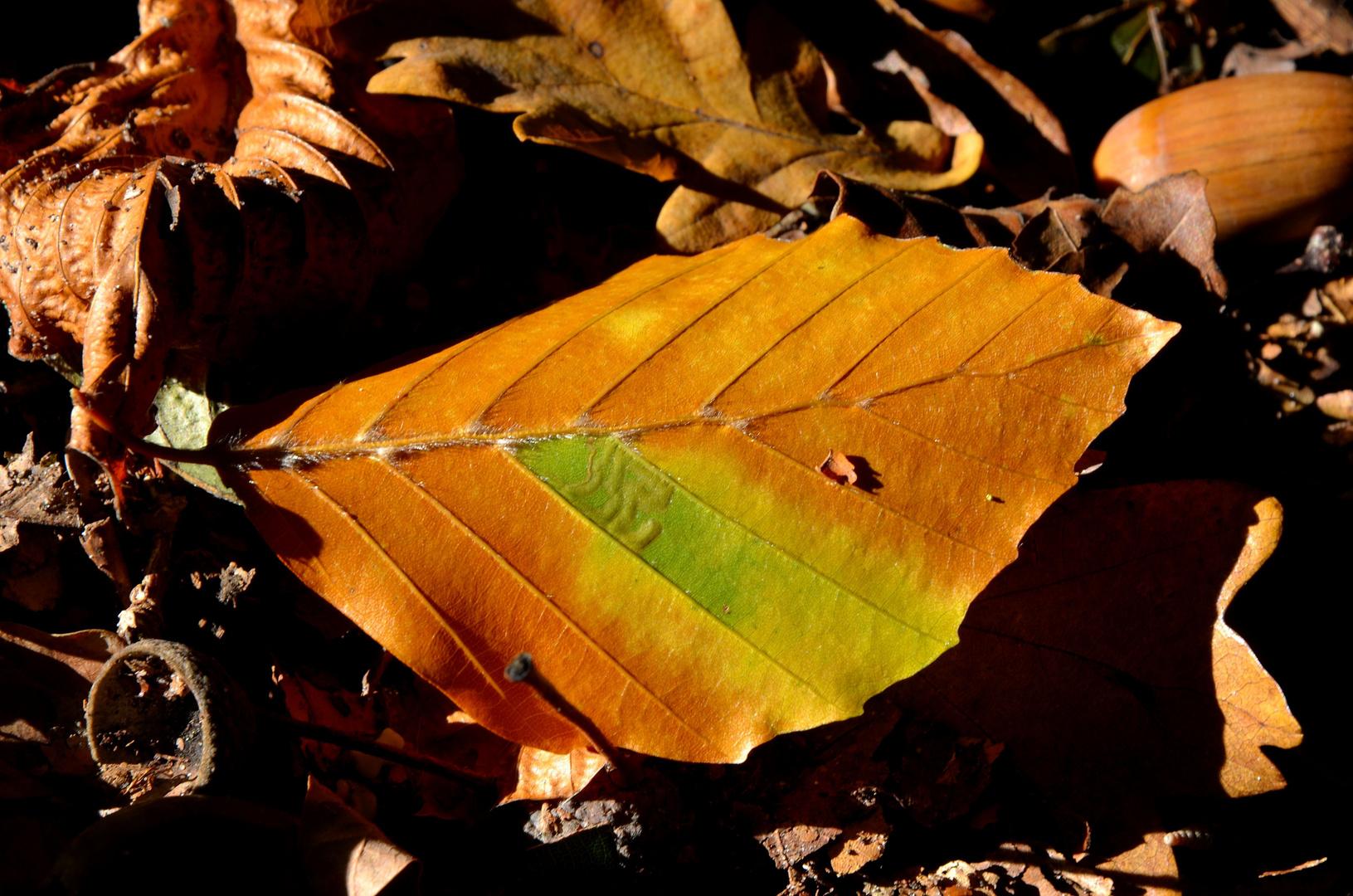 Herbstblatt ....