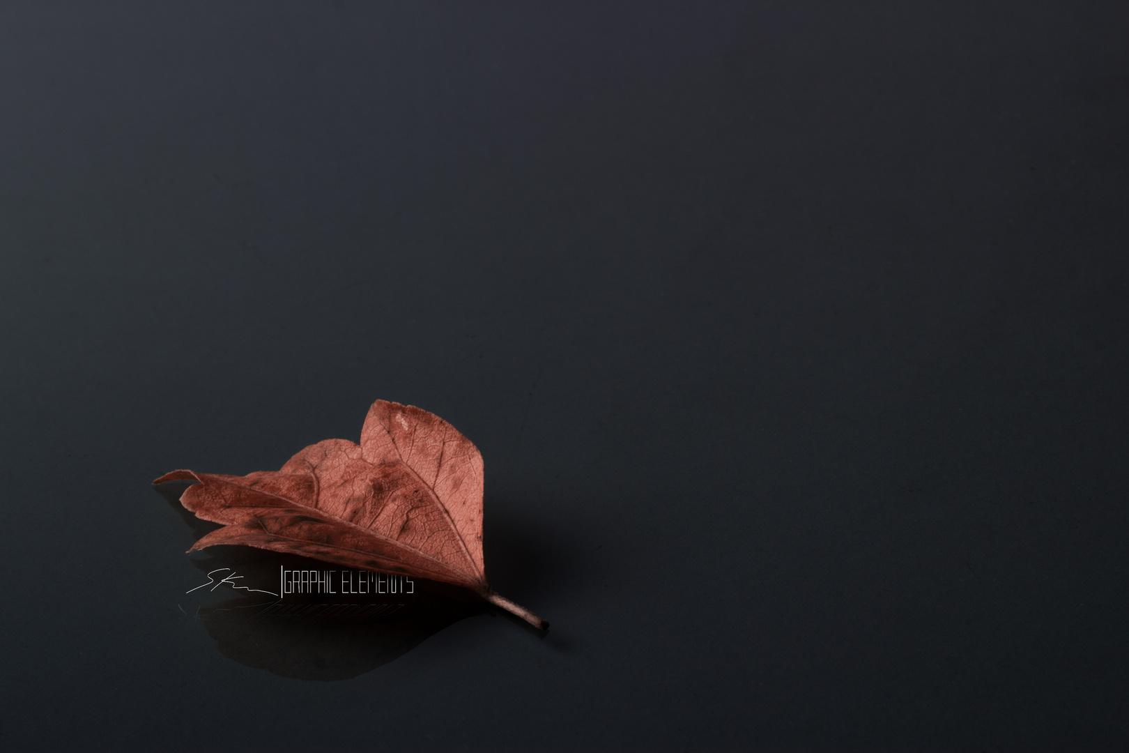 Herbst|Blatt