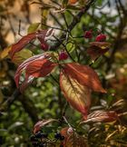 Herbstblatt..