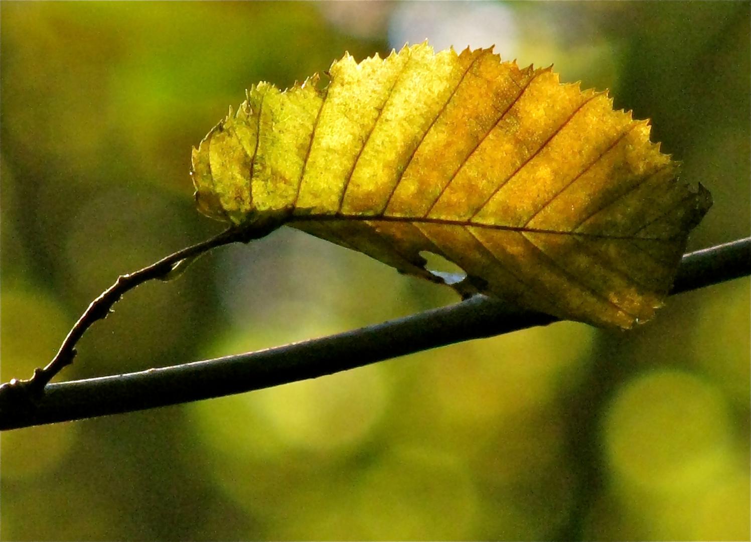 ...Herbstblatt !!!...