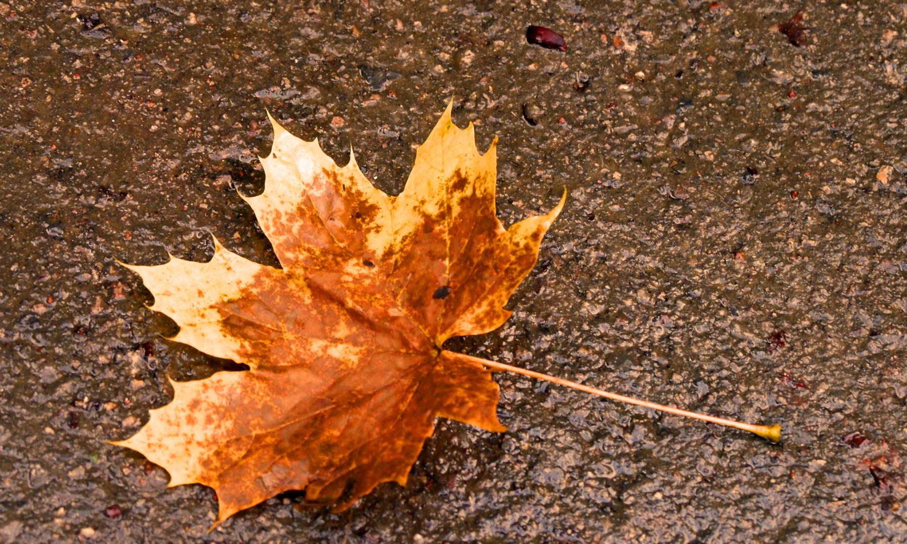 Herbstblatt auf dem Rundweg in der Aprather Mühle.
