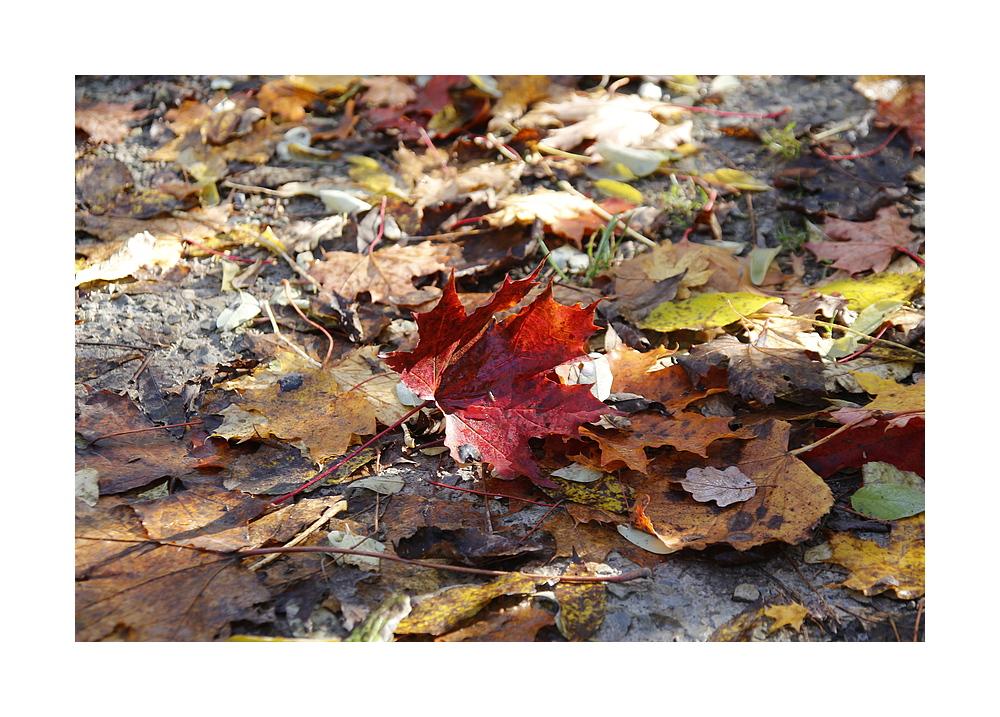 Herbstblatt auf dem Weg