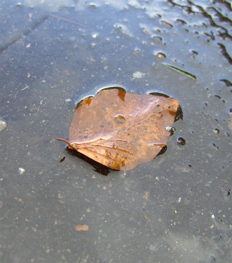 Herbstblatt im Regen