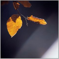 Herbstblatt in Köppern