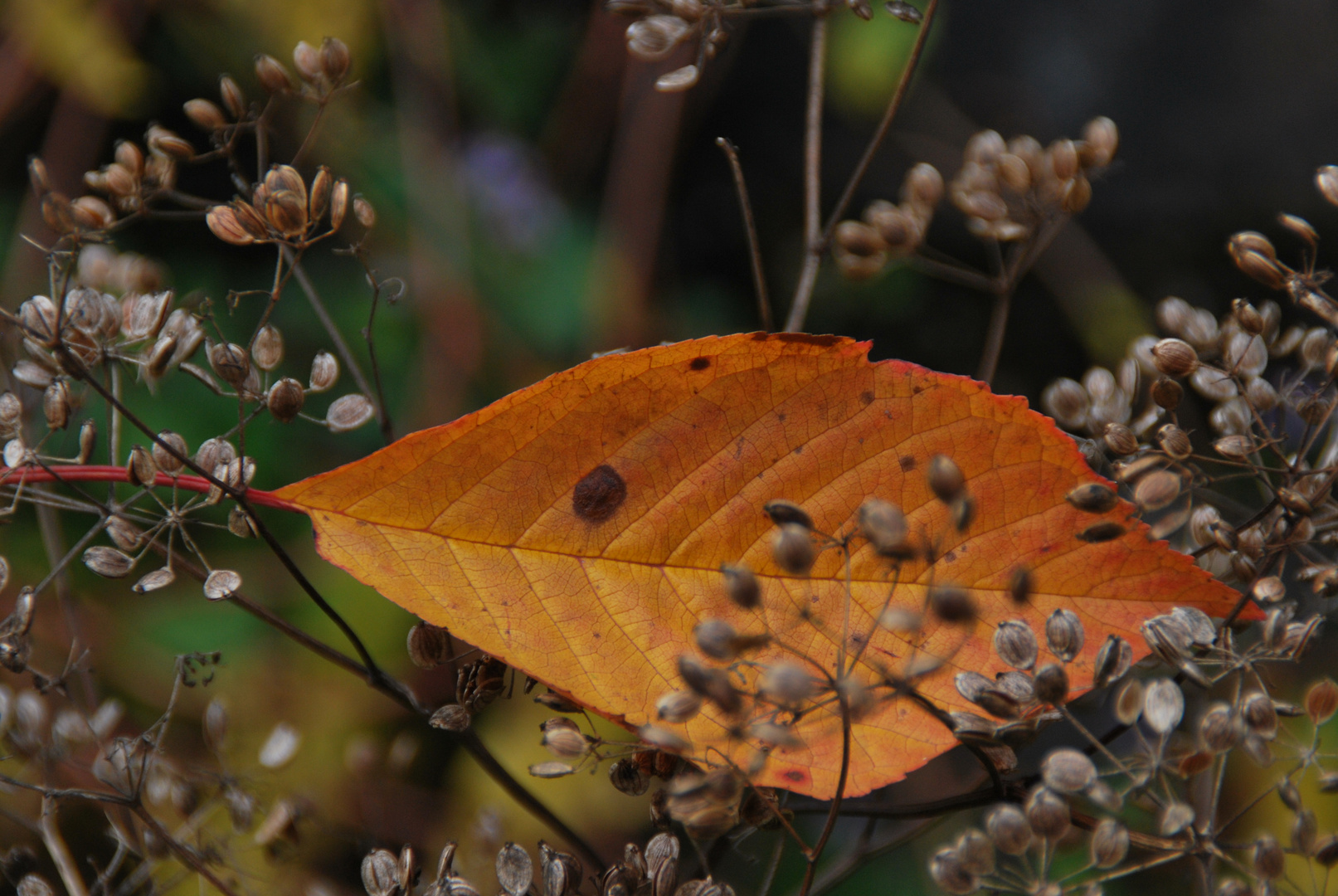 Herbstblatt lose