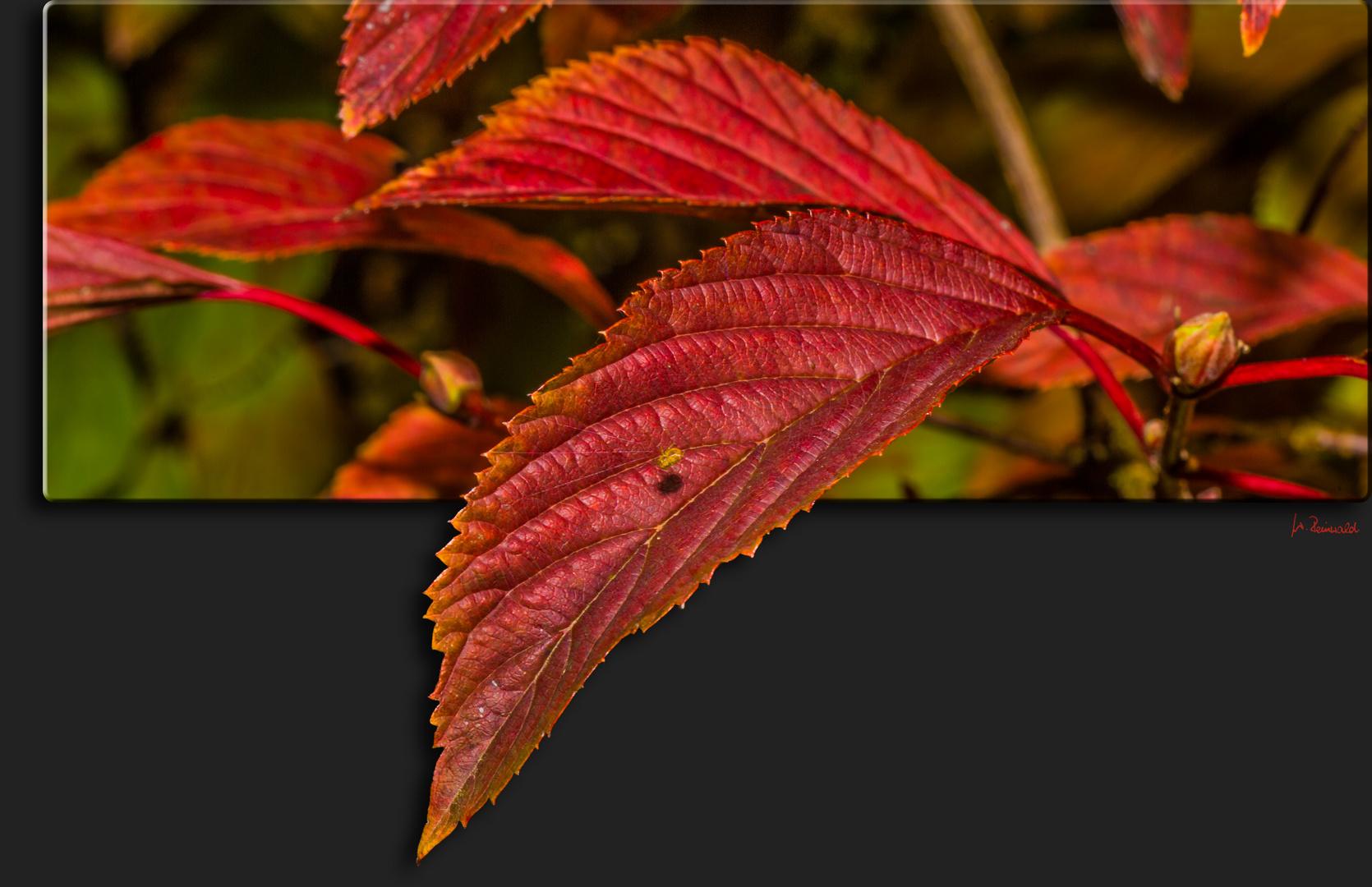 Herbstblatt mit Minispinni