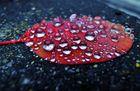 Herbstblatt mit Regentropfen