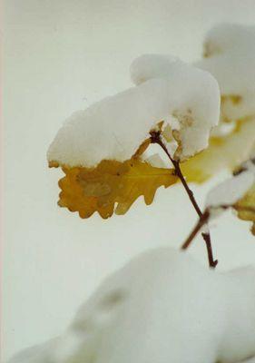 Herbstblatt mit Schnee