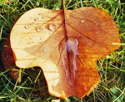 Herbstblatt nach dem Regen