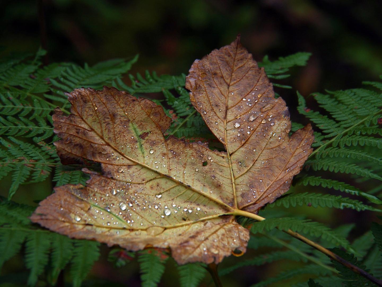 Herbstblatt nach Regen