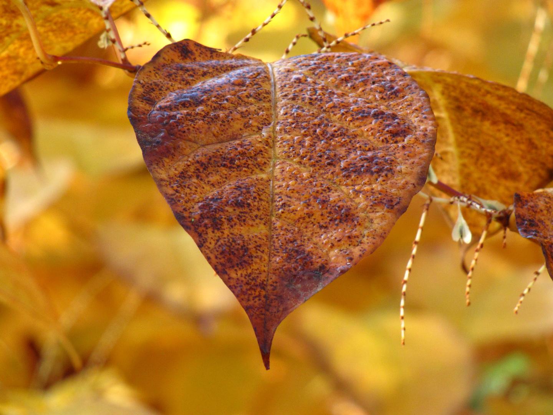 Herbstblatt passend zum Aprilwetter?