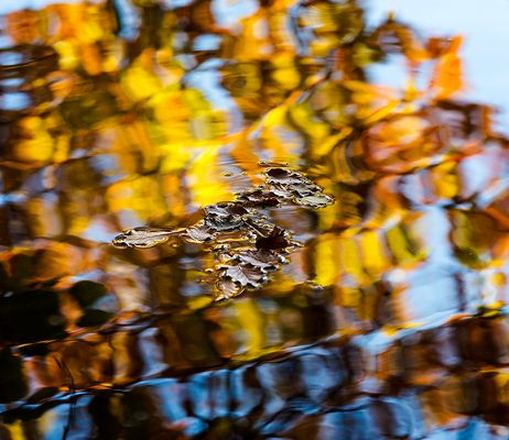 Herbstblattln ...