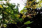 Herbstblende