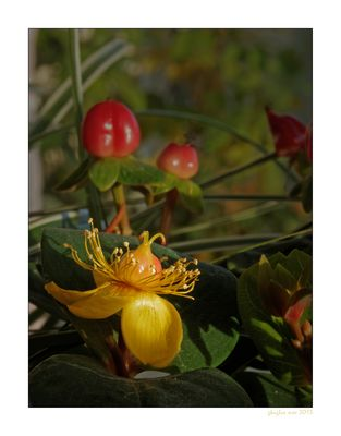 Herbstblüher
