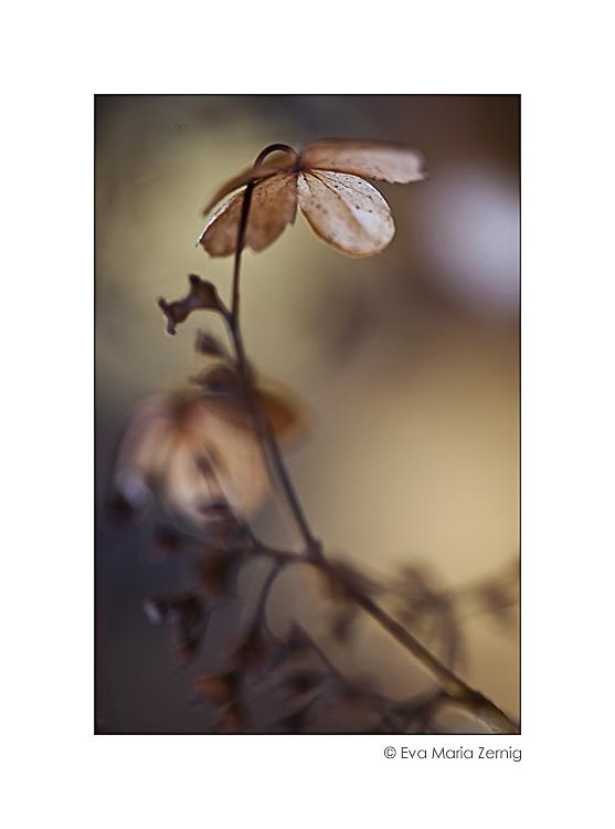 Herbstblümchen