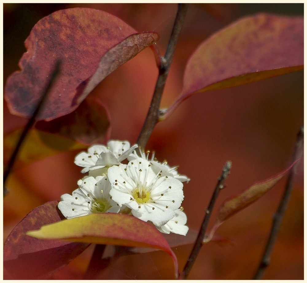 herbstblüte