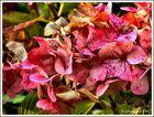 Herbstblüten *