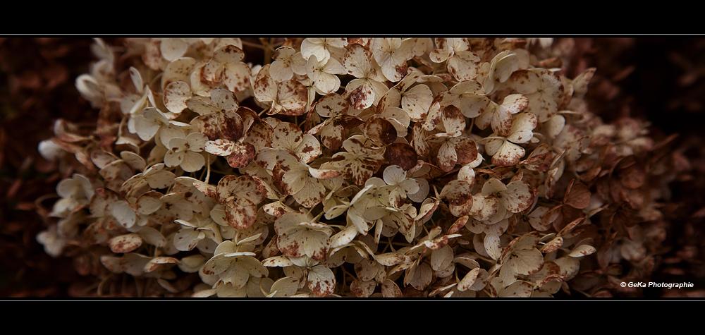 Herbstblütenzauber