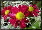 #...Herbstblumen......#