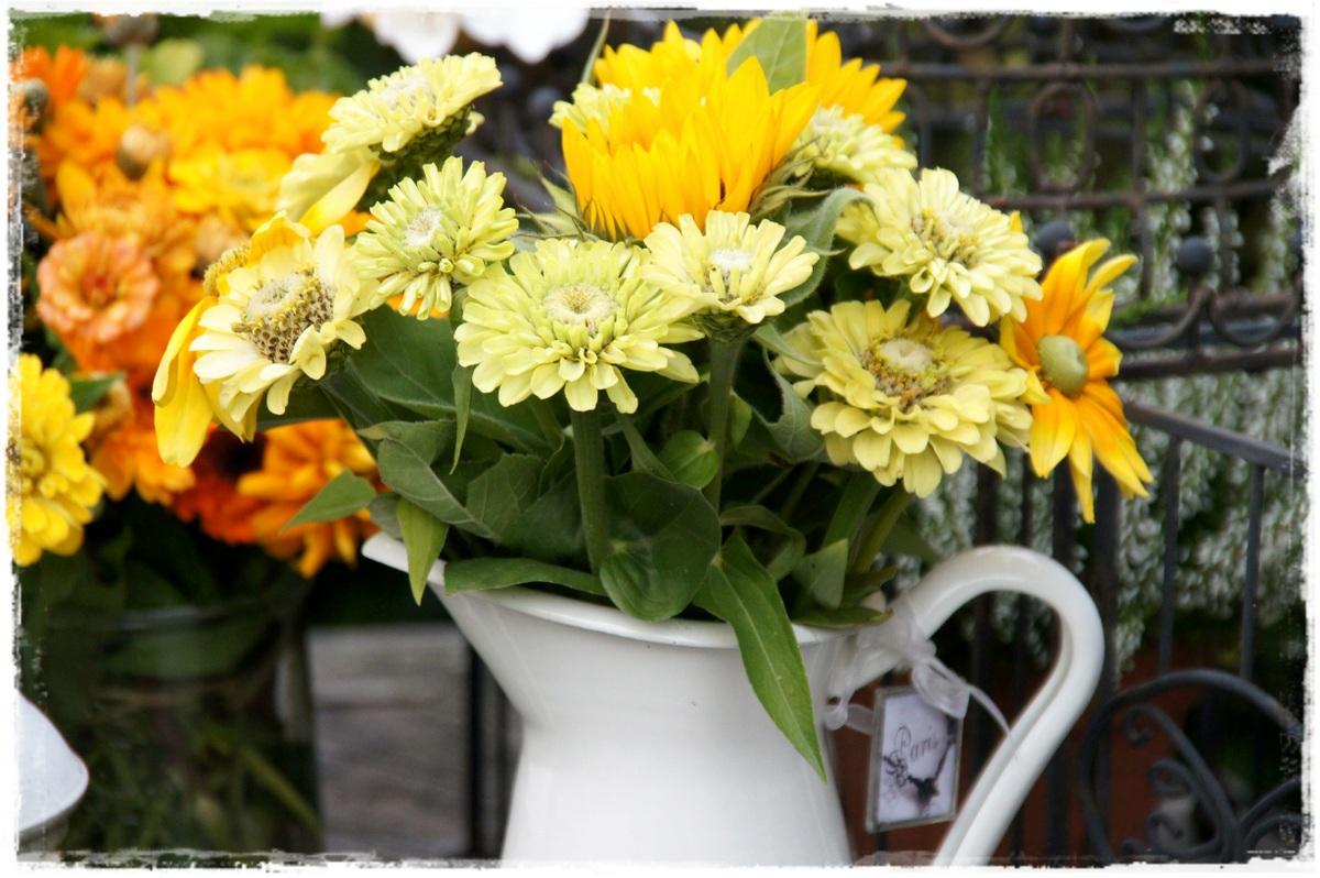 herbstblumen foto bild pflanzen pilze flechten bl ten kleinpflanzen gartenpflanzen. Black Bedroom Furniture Sets. Home Design Ideas