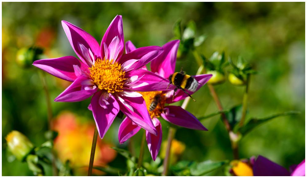 Herbstblumen II...