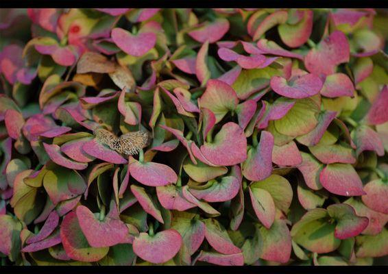 Herbstblumen im Garten