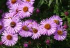 Herbstblumen und Insekten