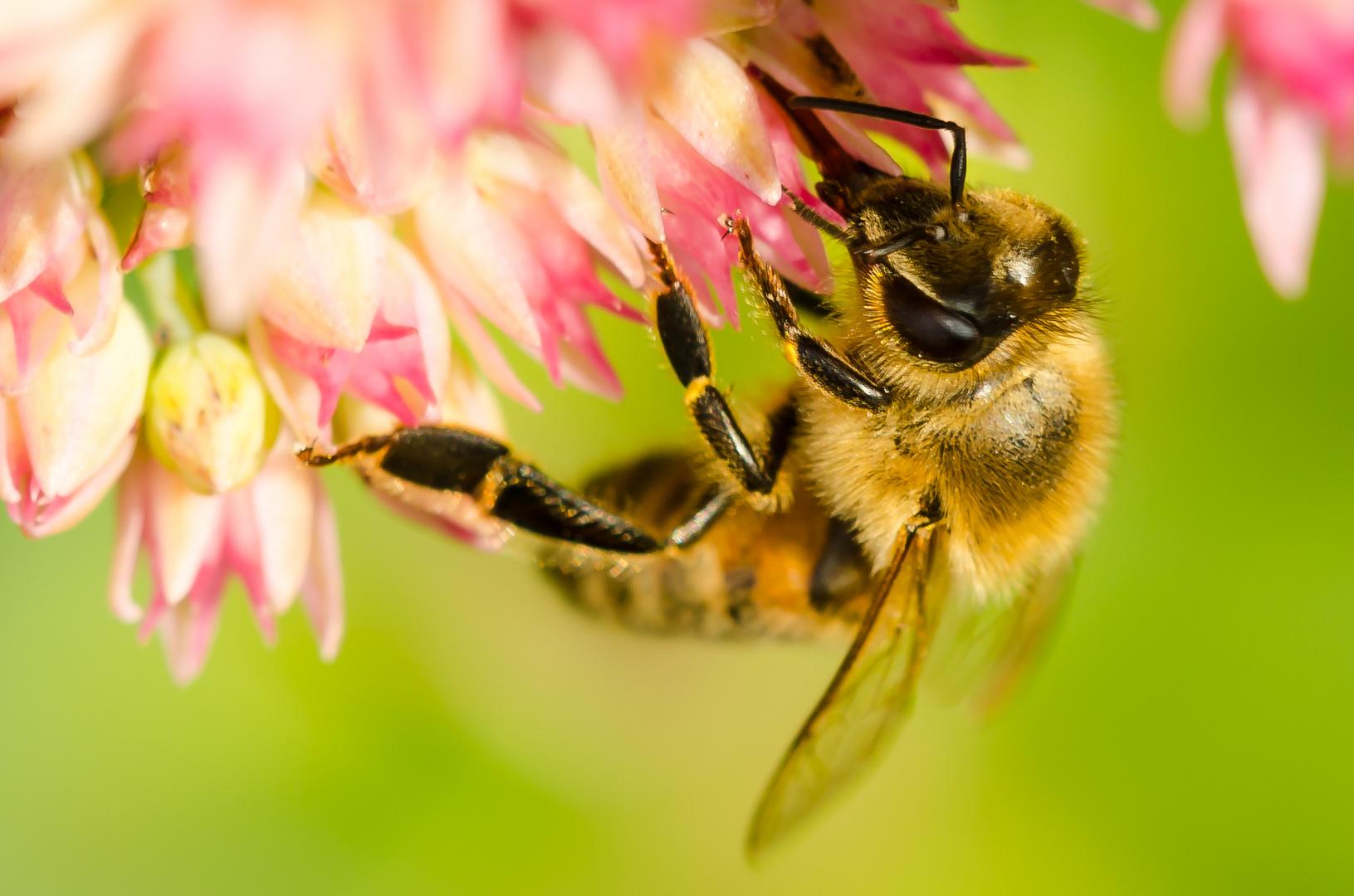 Herbstblumennektar schmeckt auch fein