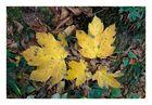 Herbstboden III