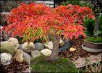 Herbstbonsai 2