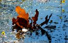Herbstbote 2