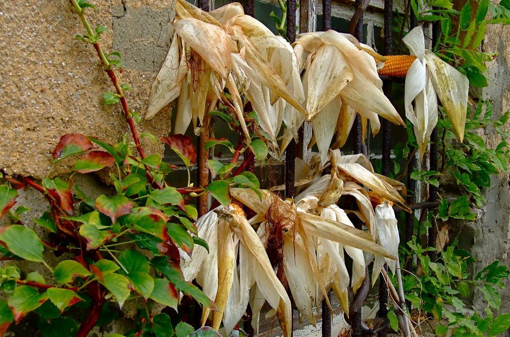 °°° Herbstbotschaft - Denkt an die hungernden Vögel im Winter °°°