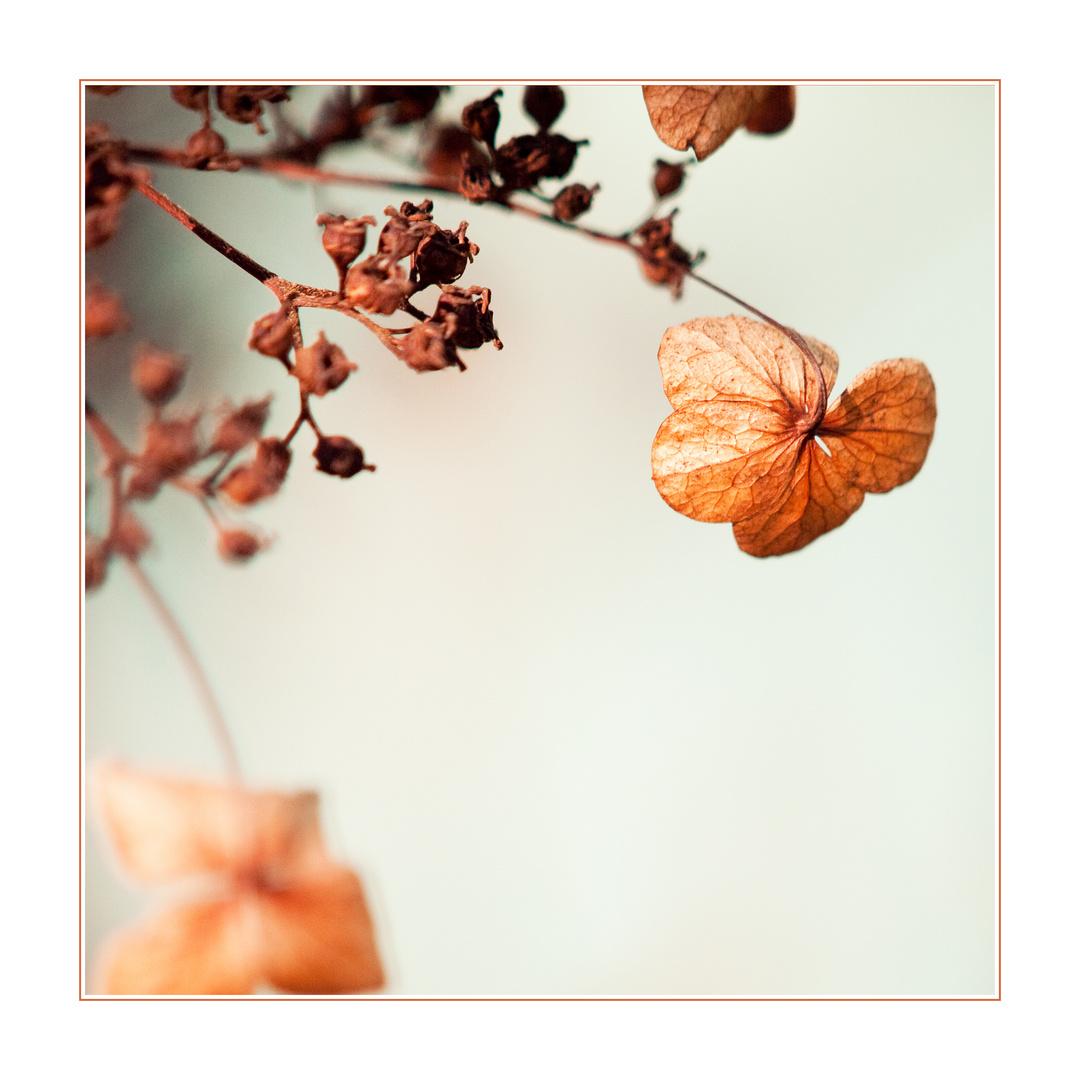 Herbst.Braun