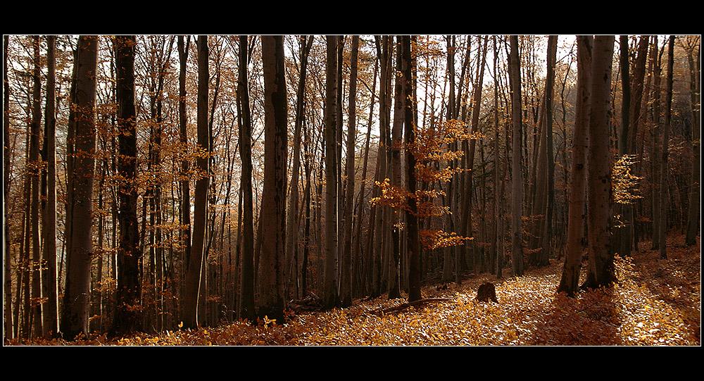 HerbstDiagonale