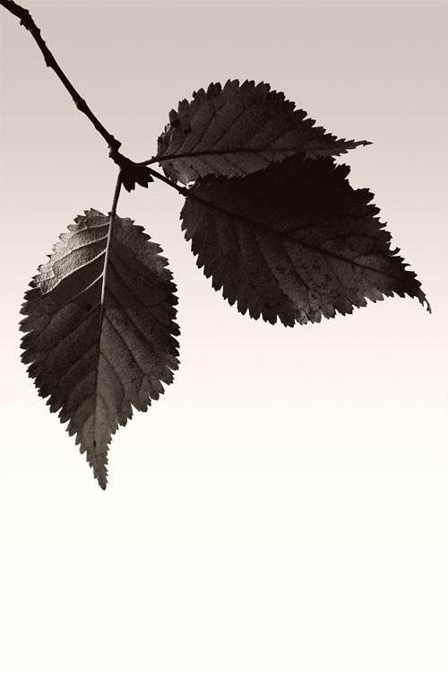 Herbstdunkel