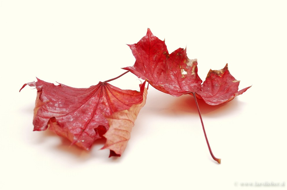 Herbstduo