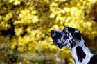 ...Herbsteindrücke...