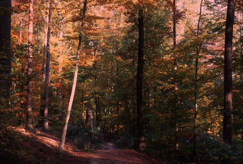 Herbsteindrücke im Wald