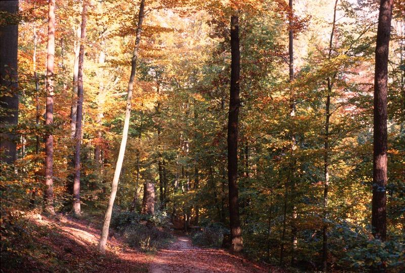 Herbsteindrücke im Wald (überarbeitete Version)