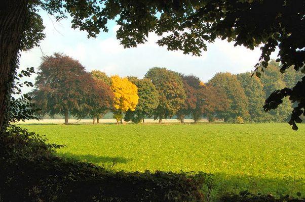 Herbsteinzug in Niedersachsen