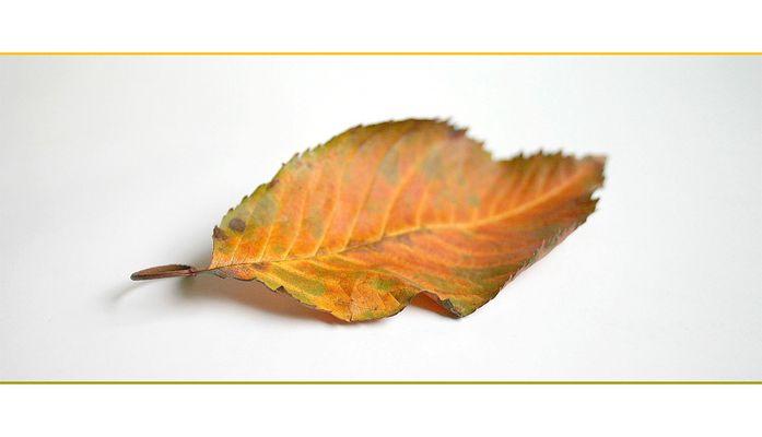 Herbsterinnerung