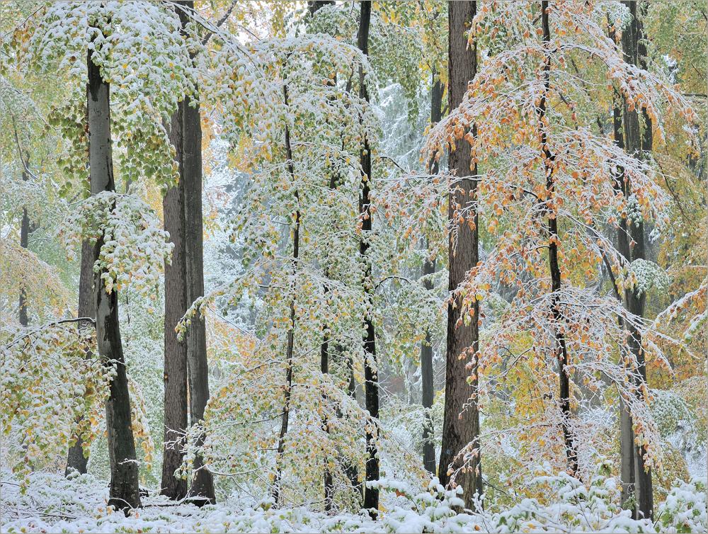- Herbsterinnerung -