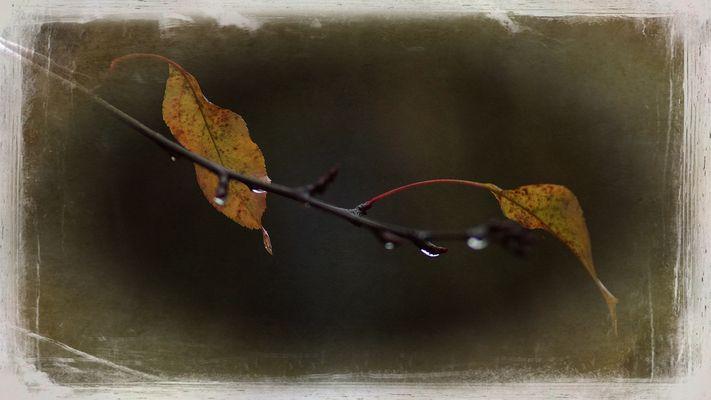 Herbsterinnerung II