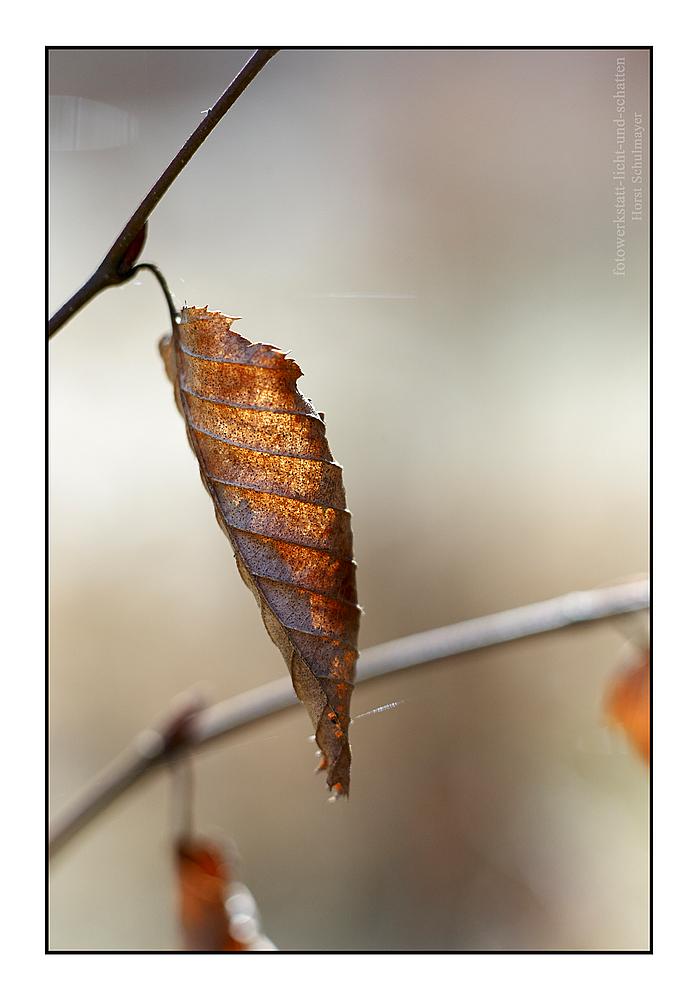 Herbsterinnungen im Frühling
