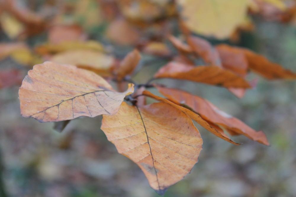 Herbsterscheinungen