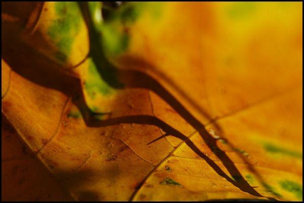 Herbstessenz