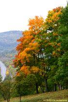 Herbstfärbung (1)