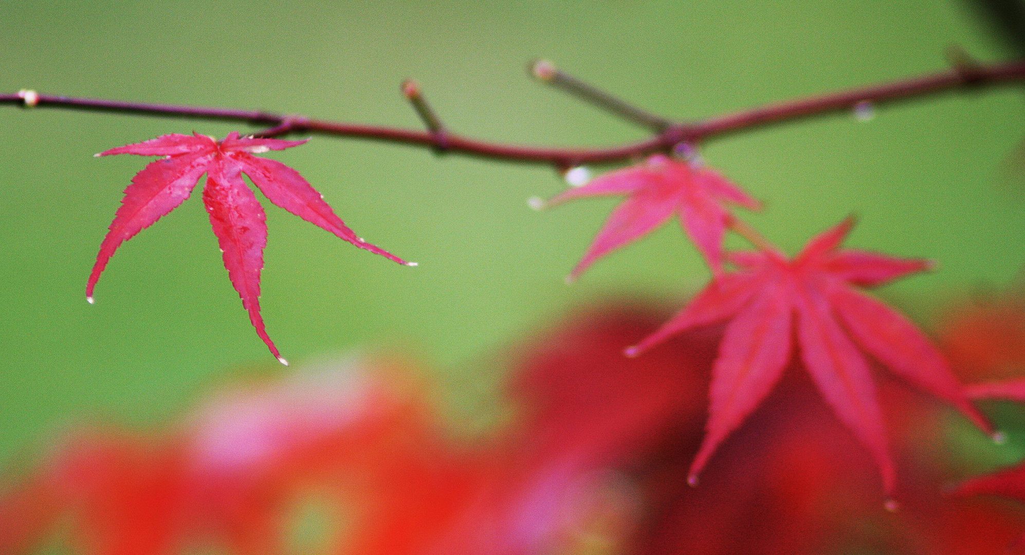 [Herbst:Färbung]